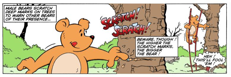 Wacky World of Animals: Bears